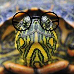 feral turtle glasses.png