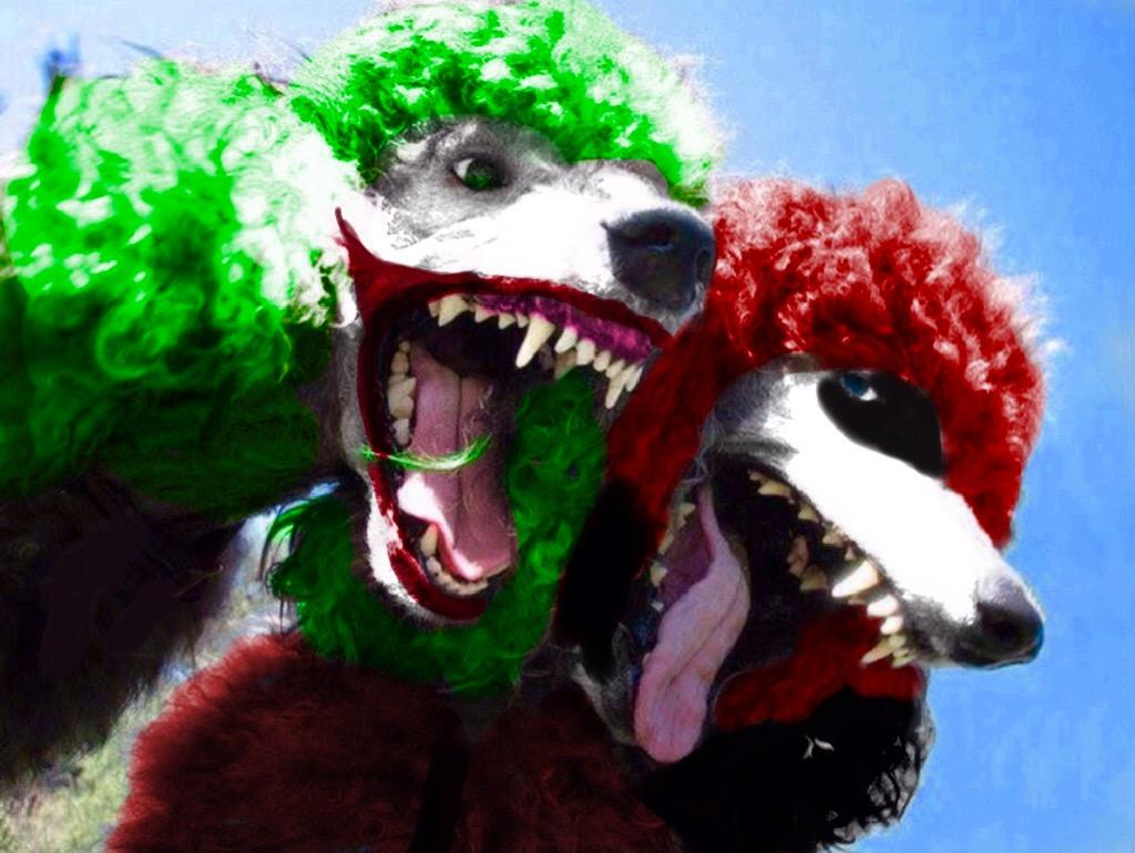 joker_and_harley_quinn_as_poodles__by_jokerfan79_de8gu2f-fullview.jpg