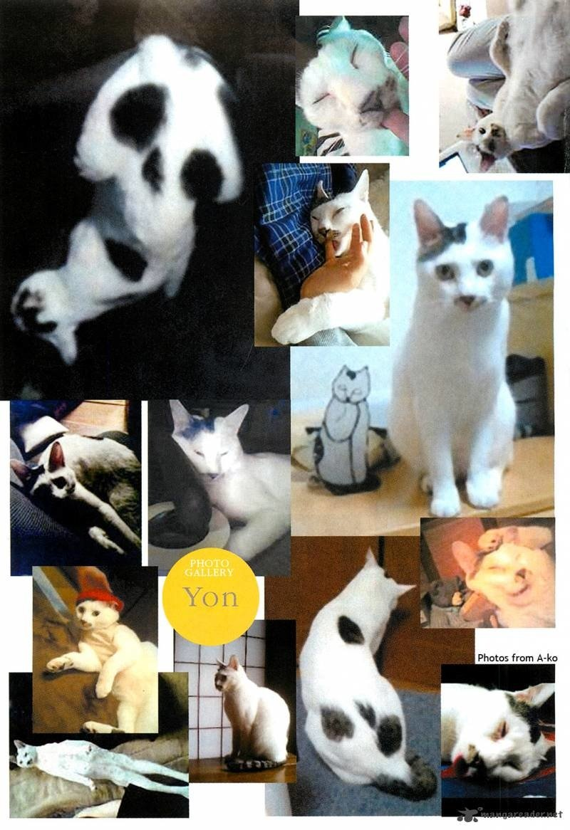Lets+not+forget+junji+itos+cat+yon+that+has+a+_ab0c89b70ea3adcca84f59a69654dad5.jpg