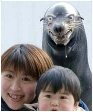 Seal Photobomb_..maybe the scariest photobomb ever. Who knew seals had homicidal tendencies.jpg